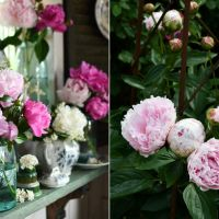 Stop and Smell the Peonies: Ball Jar Bouquets in the Potting Shed
