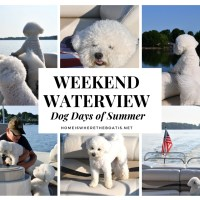Weekend Waterview: The Dog Days of Summer