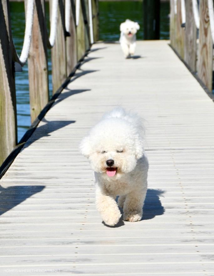 Weekend Waterview Lola and Sophie on dock | ©homeiswheretheboatis.net #lake #LKN #dogs
