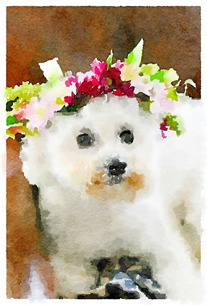 Watercolor painting of Sophie from photo with Waterlogue app | ©homeiswheretheboatis.net #dogs #bichonfrise #nationaldogday