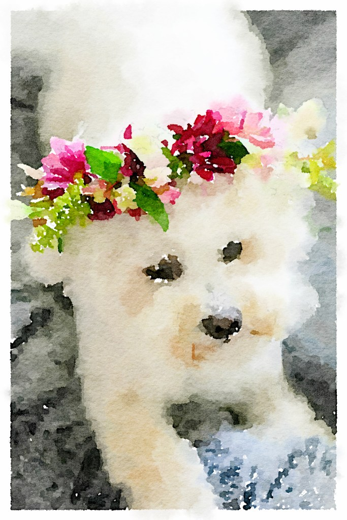 Watercolor painting of Lola from photo with Waterlogue app | ©homeiswheretheboatis.net #dogs #bichonfrise #nationaldogday