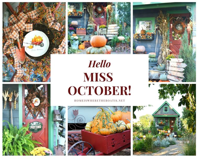 Hello Miss October and fall harvest by the Potting Shed | ©homeiswheretheboatis.net #fall #shed #pumpkins #mums