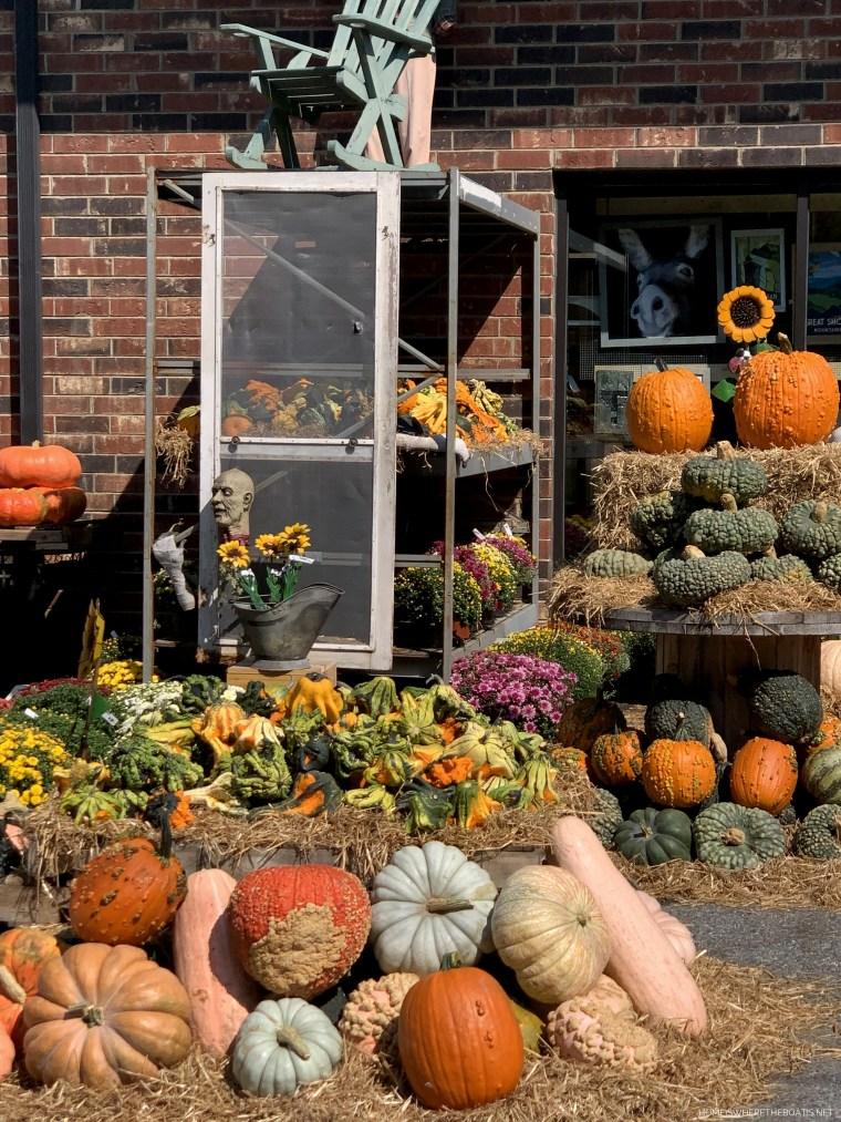 Favorite Pumpkin Patch | ©homeiswheretheboatis.net #pumpkins #fall