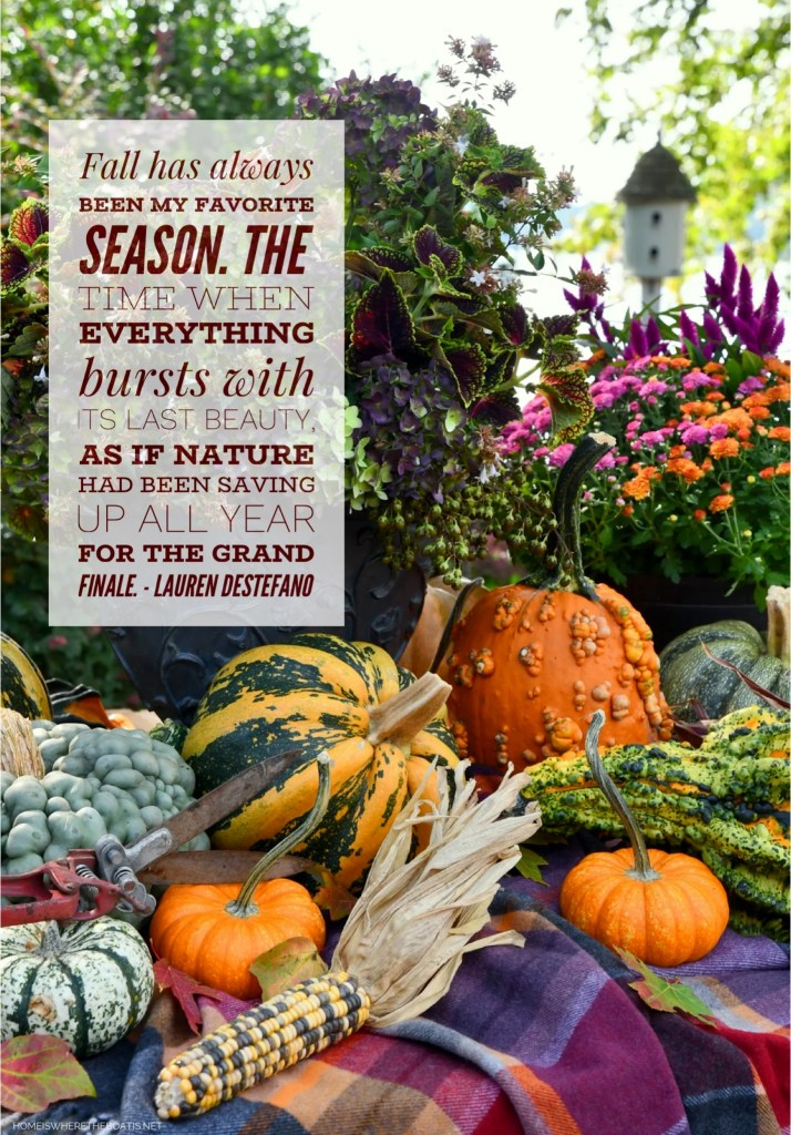 """""""Fall has always been my favorite season. The time when everything bursts with its last beauty. As if nature had been saving up all year for the grand finale."""" - Lauren DeStefano 