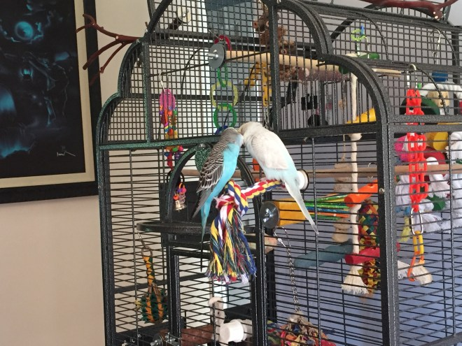 first aid kit for budgies