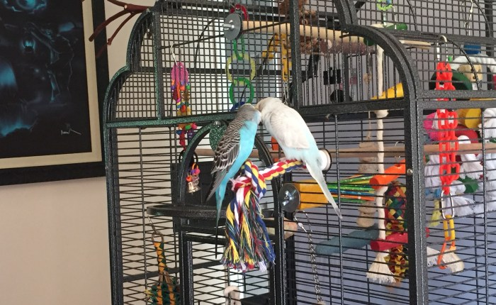 Putting together a first aid kit for parakeets