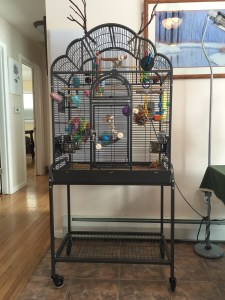 parakeet cage costs