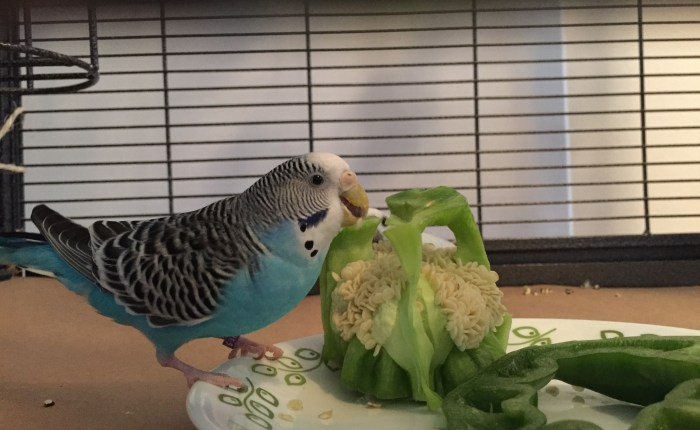 Toby's flock favorites