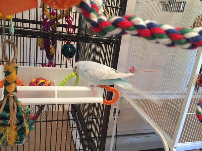 parakeet toy box