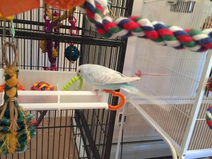 parakeet toy box