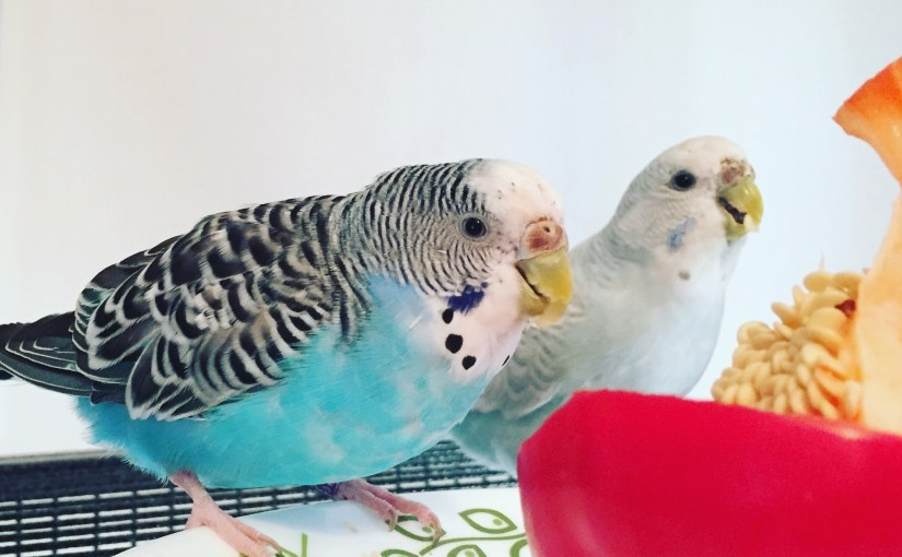 parakeets and sleeping in