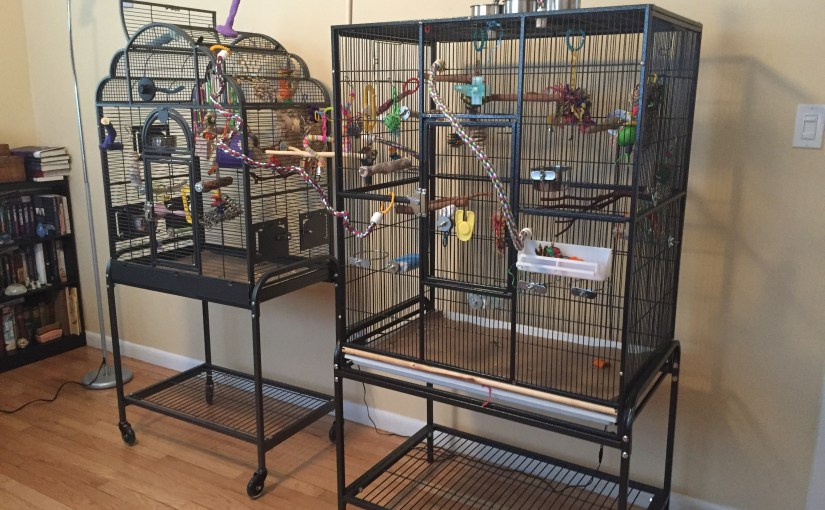 The budgies have their own room – finally!