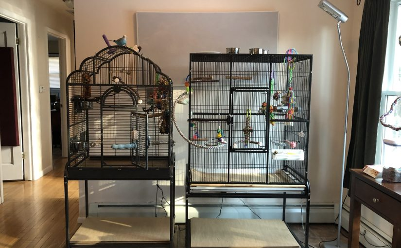 Photo tour of our parakeet cage set up and play areas
