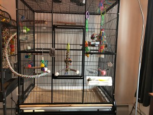 Flight cage for budgies with toys and perches in it