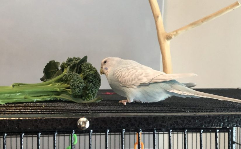 Flock update – how the girls are doing without Kevin
