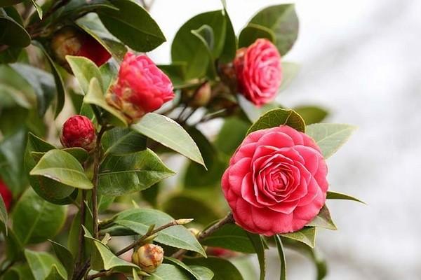 7 Indoor Plants That Bloom In Winter Home Interior