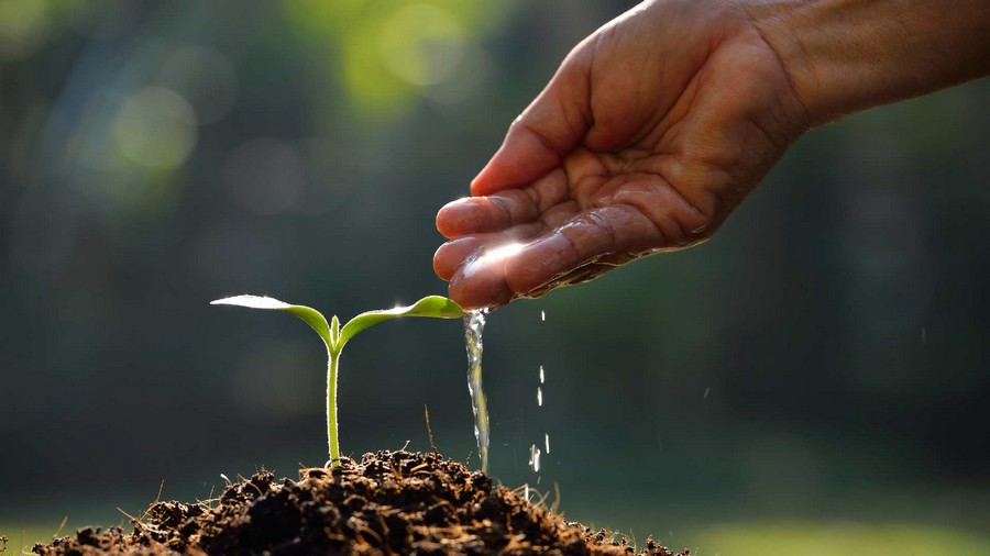 Seeds Being Watered And Grow