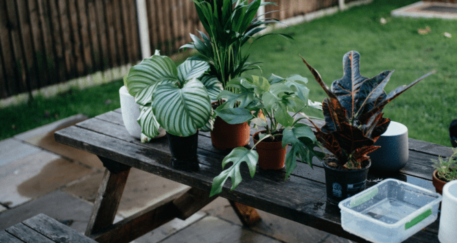 Plants that will improve the air quality in a home.