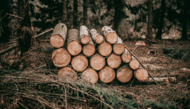 Logs near a property in California that is at risk of wildfire.