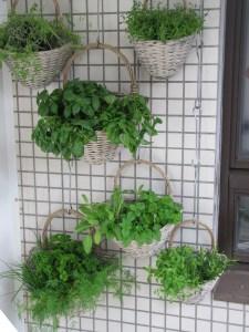 balcony, herbs, verkikaalipuutarha