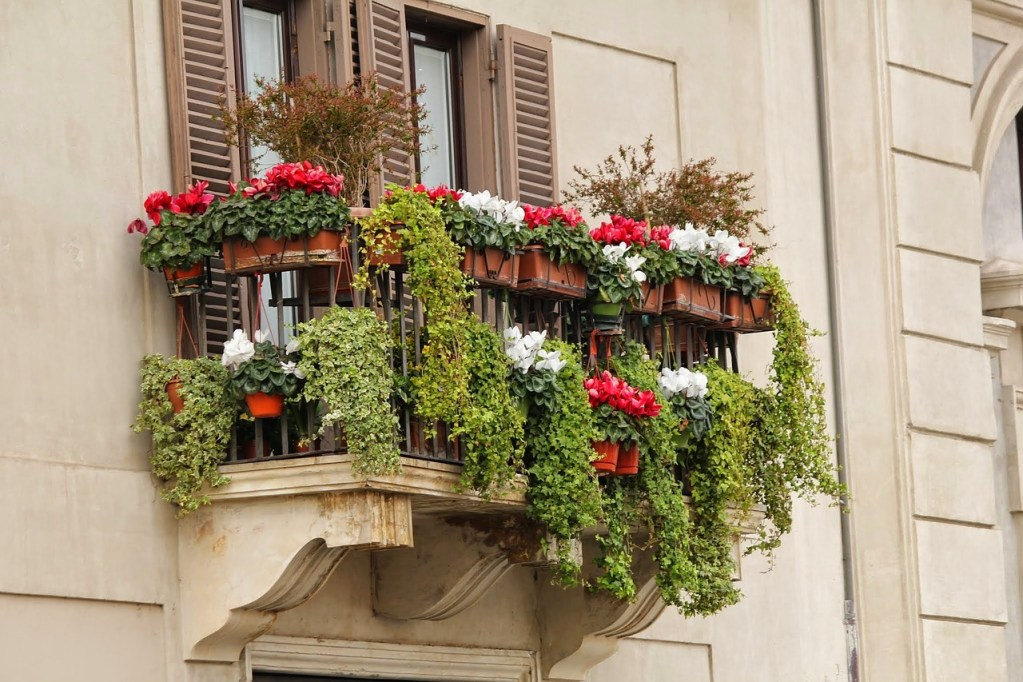 balcony, window box, flower