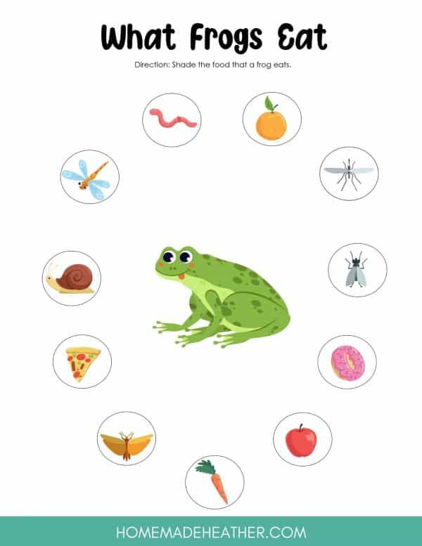 What Frogs Eat Printable