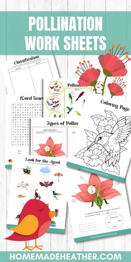 Free Pollination Work Sheets