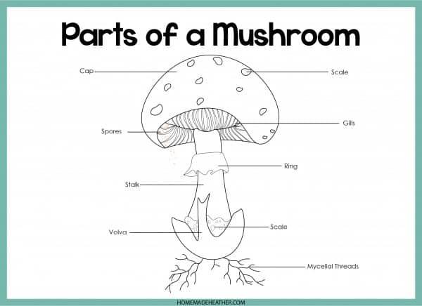 Mushroom Parts Printable