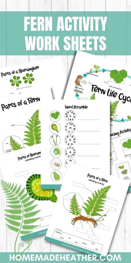 Free Fern Activity Printables