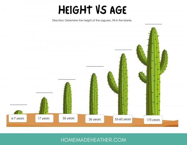 Cactus Height vs Age