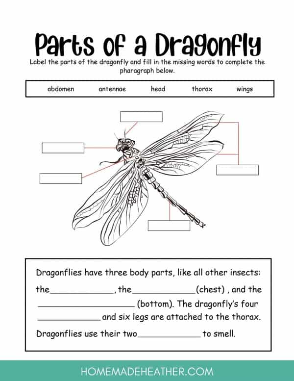 Parts of a Dragonfly Printables
