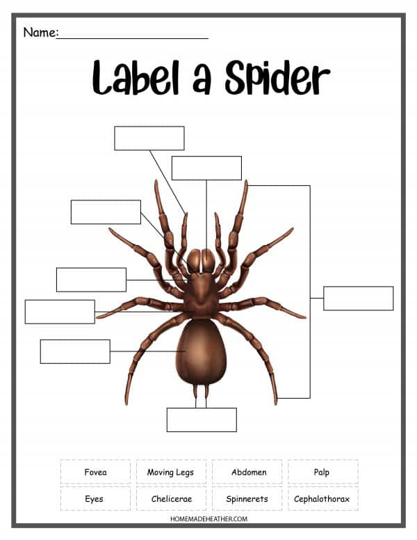 Spider work sheet