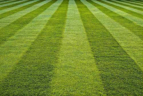 The Curb Appeal Series – Growing the Perfect Lawn