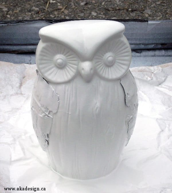 primed owl