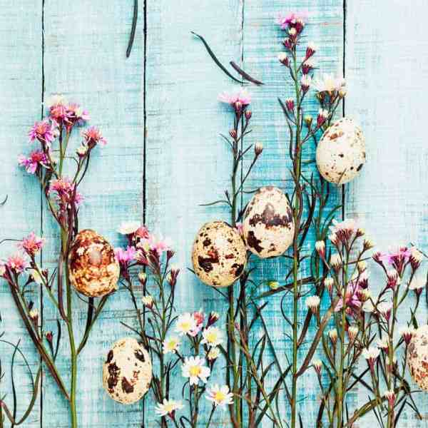 quail eggs and flowers on blue fence