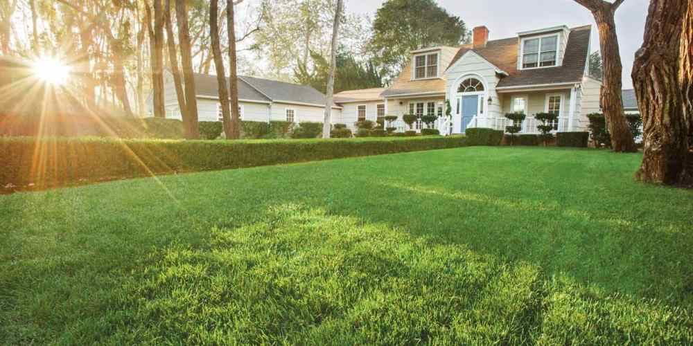 green lawn with boxwood hedge in front of white home with dormers