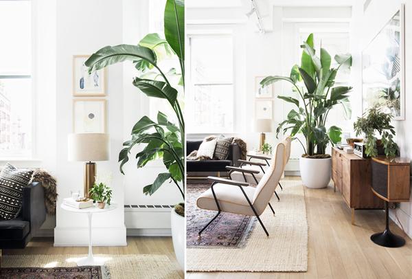 indoor gardens apartment design Shady Indoor Garden Ideas In Loft Apartment | Home Design