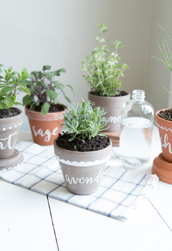 Cheap Plants Containers