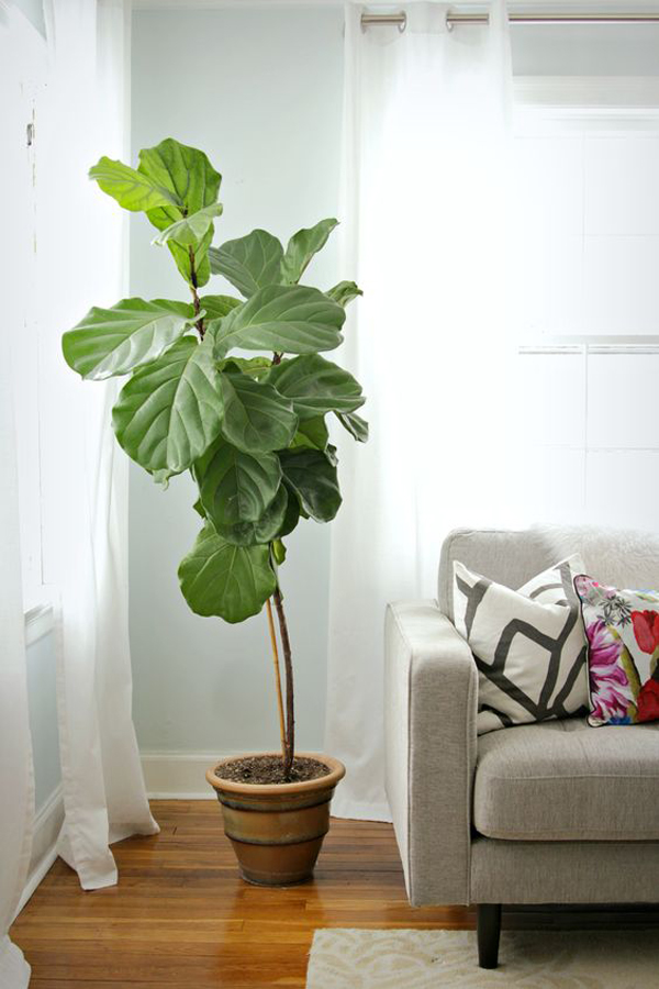 Hanging Plants Indoors Ideas