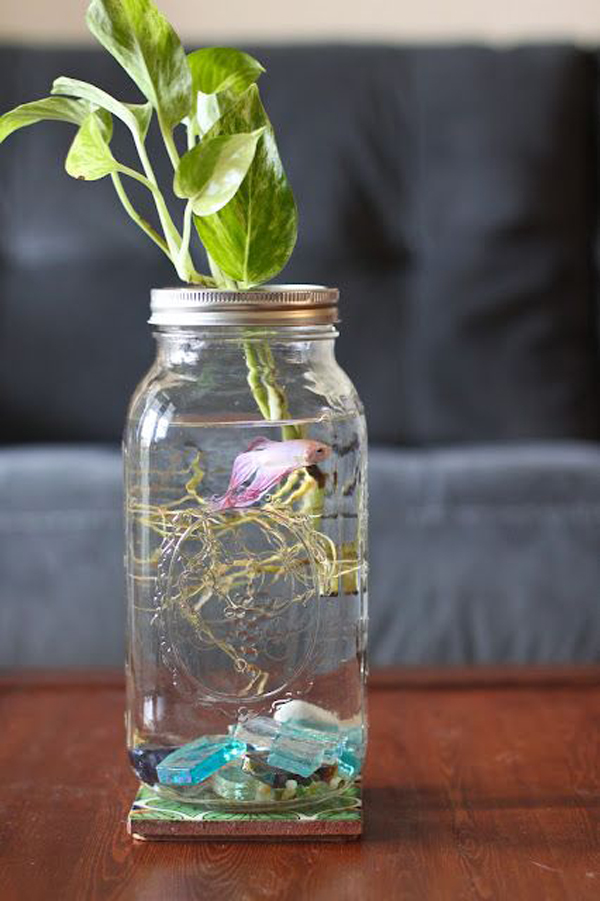 Tank Garden Water Fish Diy
