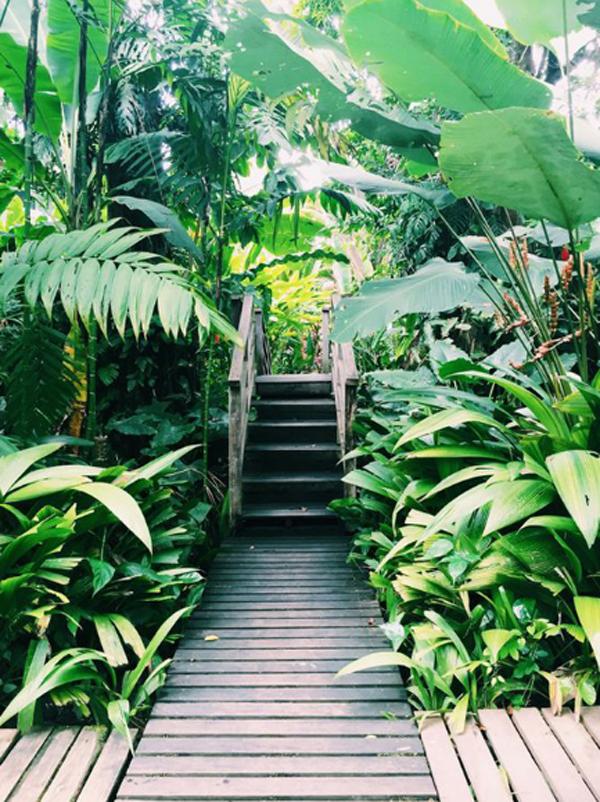20 Urban Backyard Oasis With Tropical Decor Ideas ... on Tropical Backyard Landscaping  id=29797