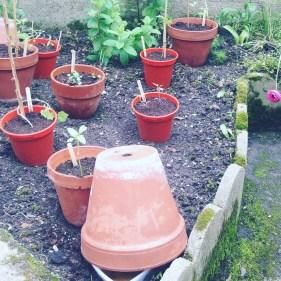piege a limace biere bar a limace plantations jardin