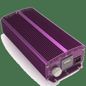Apollo-Horticulture-Purple-Reign
