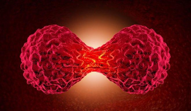 Genèse du cancer vue par homeopathe.