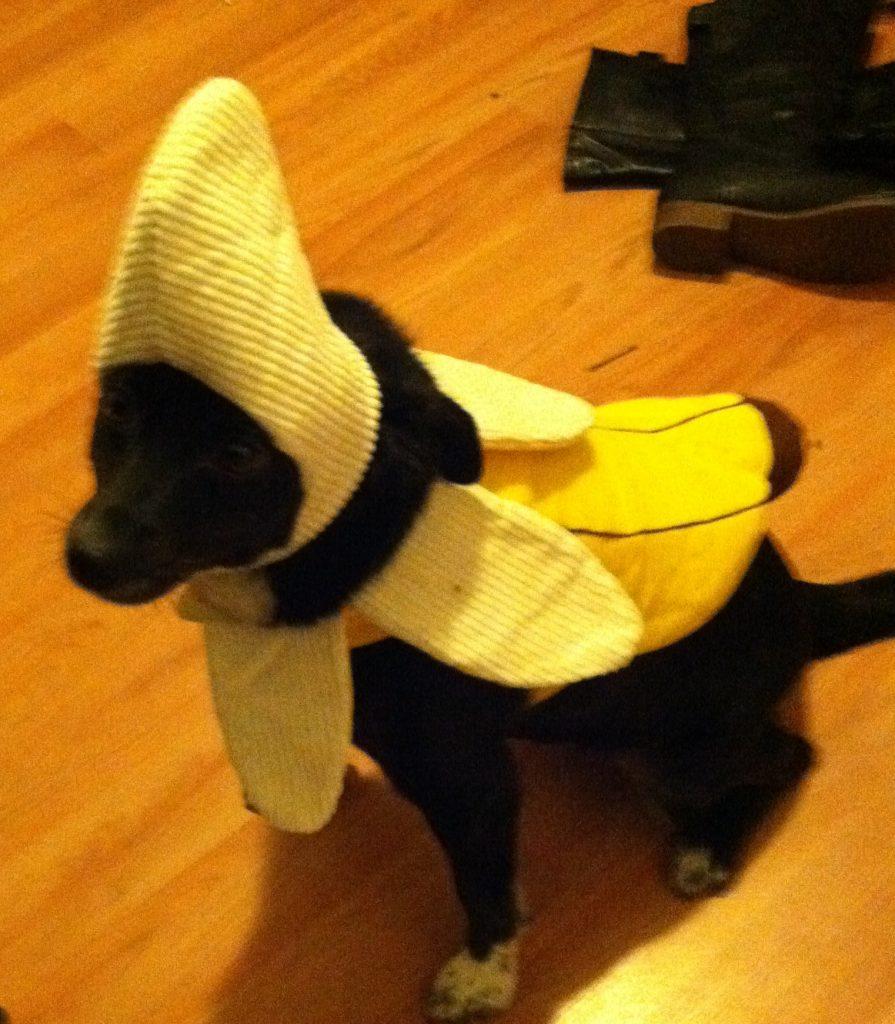 Gorilla and Banana Halloween Costume