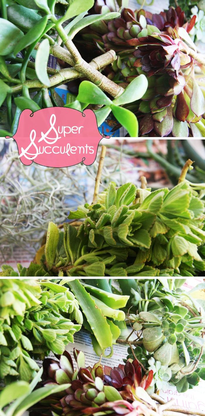 Super Succulents