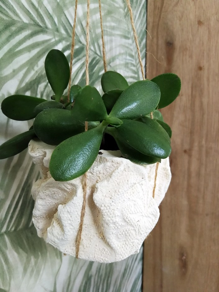 hanging planter with succulent
