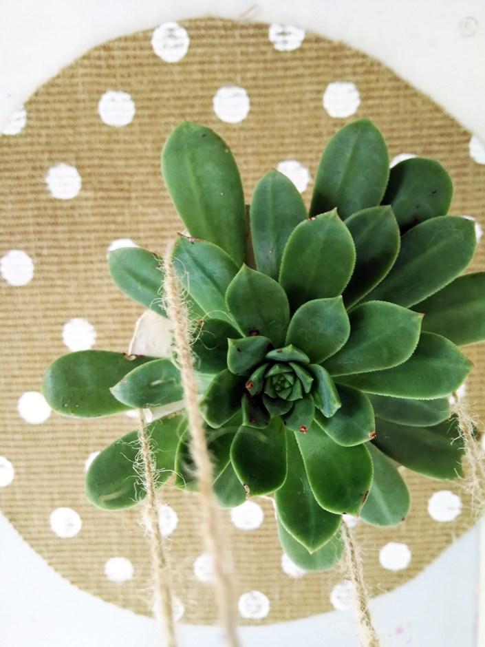 echevaria and polkadot rug