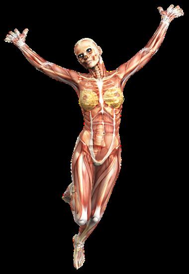 Rheumatism Bone disorders Arthritis