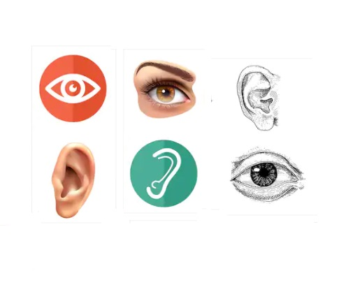 homeopathy-medicines-for-eyes-ear-ailments